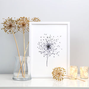 Personalised Allium Seed Head Fine Art Giclée Print