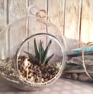 Meerkat Diy Terrarium Kit - terrariums