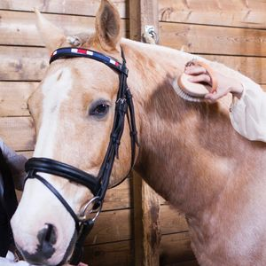 Browband For Horses - new in pets