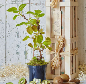 The Kiwi Plant Gift - personalised gifts