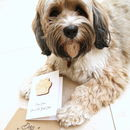 Paws Down Card From The Dog