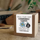 Grow Your Own Chamomile Tea Plant