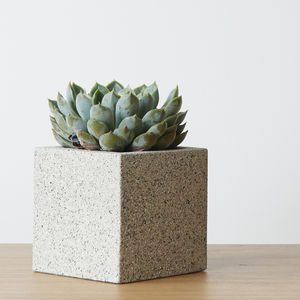 Cement Square Planter Pot