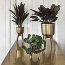 Brass Look/Wood Planter On Stand