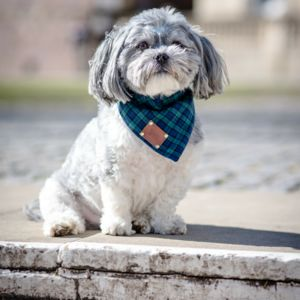 Smithfield Luxury Dog Bandana Neckerchief