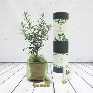Olive 'Tree Of Friendship' Gift - 30th birthday gifts