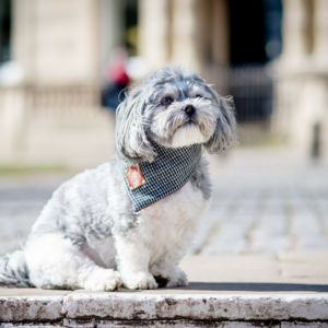 Walton Luxury Dog Bandana Necherchief