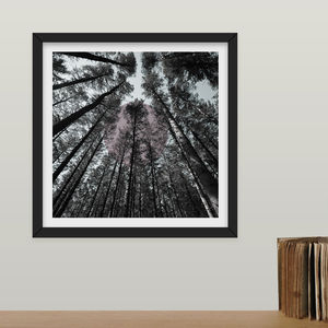 Limited Edition 'Tall Trees' Photographic Print