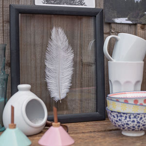 Framed Ostrich Feather