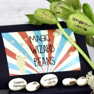 Magic Wizard Bean Grow Set