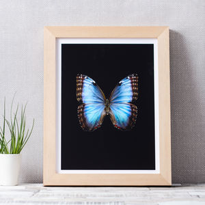 Butterfly Photographic Print - posters & prints