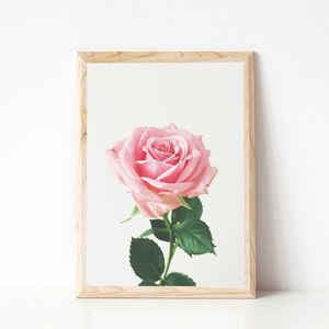 Spring Rose Photographic Flower Print - still life