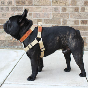 Cotton Web / Leather Dog Strap Harness - pet leads & harnesses