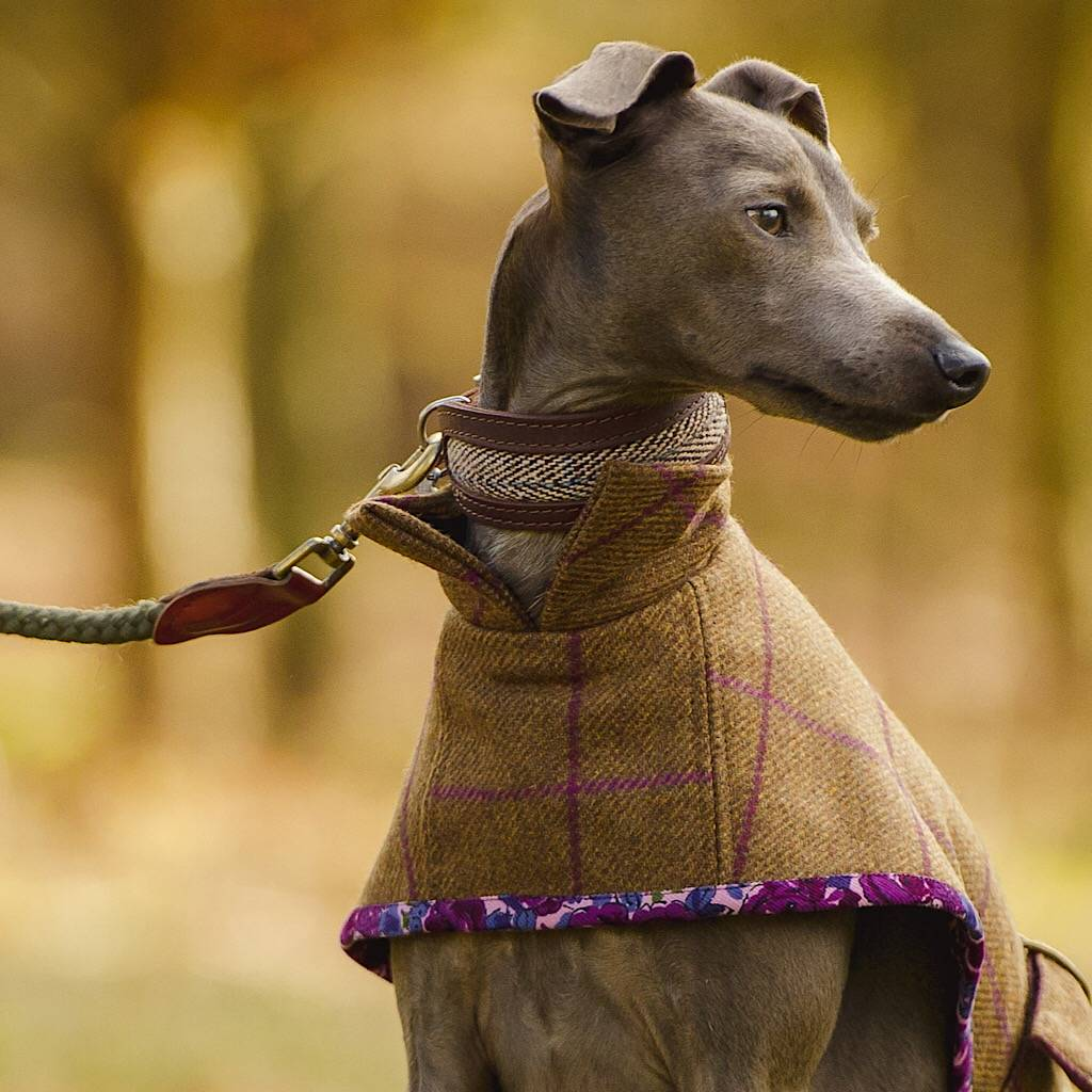 Dog Coat Pattern By Redhound For Dogs Notonthehighstreetcom