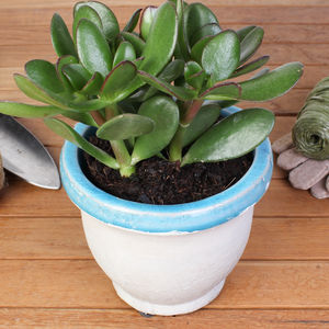 Indoor Natural Stone Blue Planter - new in garden