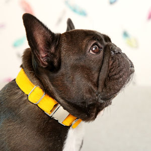 Bright Corduroy Dog Collar - dog collars