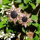 Copper Sunflower Garden Sculpture