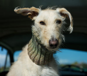 Woollen Snood For Dog - dogs