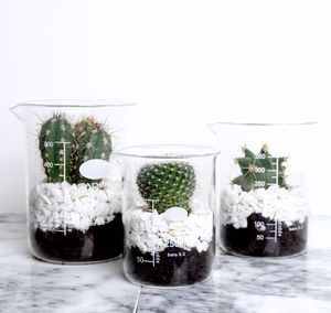 Laboratory Beaker Cactus With Planting Set - gifts for her