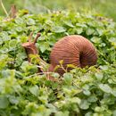 Rusty Garden Snail Sculpture