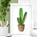 Watercolour Cactus Illustration Print
