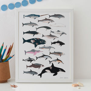Whales And Dolphins Cetacean Print