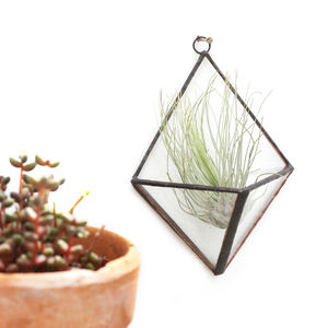 Geometric Glass Diamond Wall Terrarium - terrariums