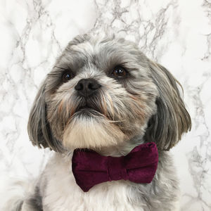 Party Luxe Velvet Dog Bow Ties - pet's christmas clothing