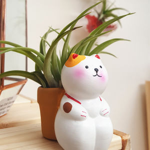 Mini Cat Plant Holder With An Air Plant - pet-lover
