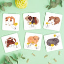 Guinea Pigs Drinks Coasters
