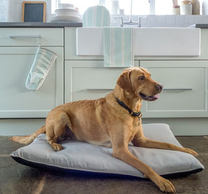 Plain Grey Mattress Dog Bed With Recycled Fill - beds & sleeping