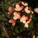 Pink Hydrangea Recycled Metal Garden Sculpture