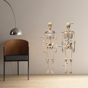 Educational Human Skeleton Wall Stickers - wall stickers