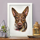 Pet Portrait In Pastel Pencil Drawing Painting