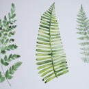Watercolour Fern Botanical Print