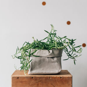 Grey Washable Paper Plant Bag - new in garden