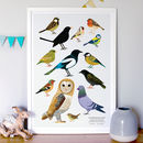 Neighbourhood Birds Print