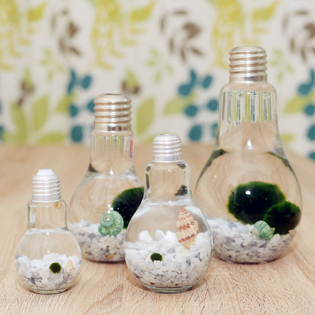 Japanese Marimo Moss Ball Terrarium In Light Bulb Vase By Dingading
