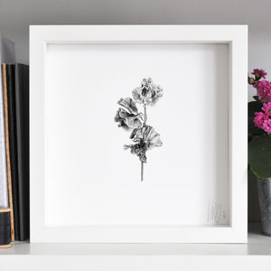 Sweet Pea Flower Print