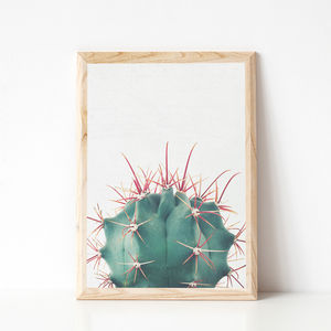 Ferocactus Botanical Photographic Print - new in prints & art
