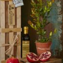 Pomegranate Tree Limited Edition Gift Set