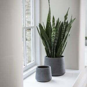 Black Cement Plant Pots