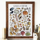 Seashells Of Britain Wildlife Collection Print