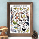 Garden Birds Of Britain Wildlife Watercolour Print