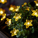Dainty Flower Micro Fairy Lights
