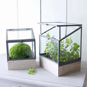 Mini Greenhouse Plant Box - the greenhouse edit