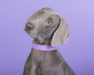 Lilac Leather Dog Collar