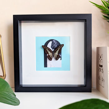 Framed Common Jay Butterfly On Collage