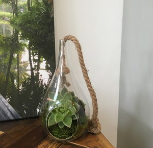 Hanging Glass Terrarium - terrariums