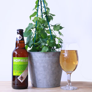 Grow Your Own Hops Gift Set